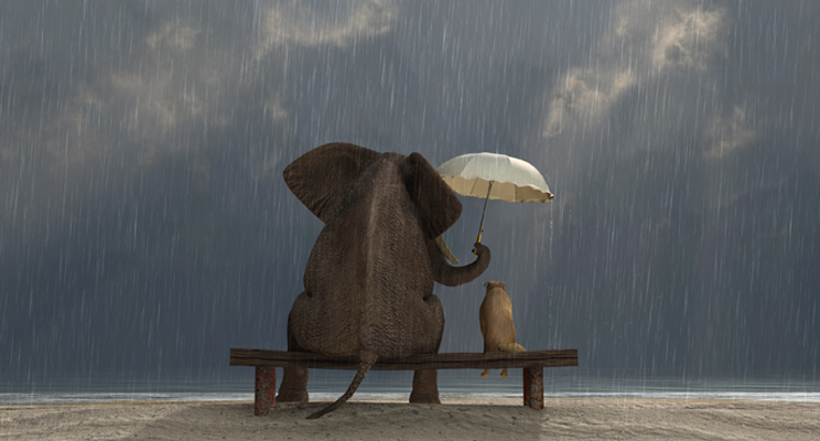 An elephant and a dog sitting on a bench, in the rain, on a beach. The elephant is sheltering the dog with an umbrella.
